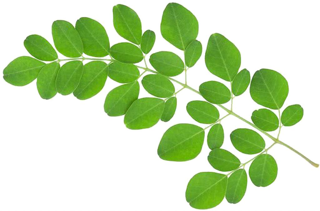 moringa boosted dishes